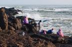 Quảng Bình: Thứ đặc sản rong biển này mọc tốt nơi nguy hiểm nhất, sao dân vẫn tìm hái dù đã có người thiệt mạng?