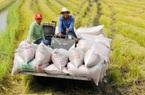 Giá nông sản hôm nay (17/12): Giá lúa gạo ổn định ở mức cao, cà phê đồng loạt tăng 100 - 200 đồng/kg