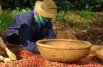Giá nông sản hôm nay (18/12): Hà Nội đứng đầu về giá lợn hơi, cà phê tăng ở nhiều vùng trọng điểm