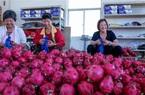 Trung Quốc trồng thanh long nhiều ngang ngửa Việt Nam, điều này có lo ngại gì?