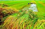 Một số vấn đề trao đổi về chính sách hỗ trợ phí bảo hiểm nông nghiệp