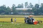 Tìm hướng mới cho bảo hiểm nông nghiệp