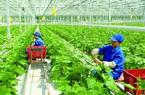 """Doanh nghiệp đầu tư vào nông nghiệp công nghệ cao vẫn """"đói"""" vốn"""