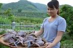 Bắc Giang: Đỏ như ngọc, mọc trong rừng, trước nhiều vô số, nay cạn kiệt là thứ nấm gì ở huyện Sơn Động?