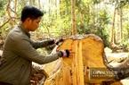 Vì sao Bộ NNPTNT đề xuất loại bỏ 57 dự án chuyển mục đích sử dụng rừng, đưa ra khỏi diện quy hoạch?