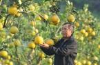 Chỉ trồng cây ăn quả, cựu chiến binh thu nửa tỷ mỗi năm