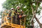 Công viên Cây xanh Hà Nội: Lợi nhuận giảm vì Làng hoa Thụy Khuê gặp khó