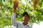 Một ông nông dân tỉnh Đồng Tháp chưa bao giờ làm ruộng, bất ngờ thành công khi trồng loài cây lạ lẫm này