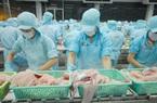 Xuất khẩu cá tra sang Trung Quốc giảm mạnh do ách tắc ở cửa khẩu