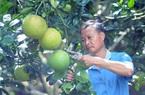 Ngọc Lan hướng đến sản xuất nông nghiệp hữu cơ