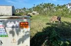 Quảng Ngãi: Rà soát để xóa bỏ 247 dự án khu dân cư đã thực hiện đến đâu?