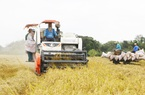 Điều gì giúp xuất khẩu gạo thắng lớn trong năm 2020?