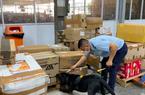 CLIP chó nghiệp vụ tìm thấy gần 5kg ma túy ở sân bay Tân Sơn Nhất
