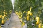 Bắc Giang: Bất ngờ năm Covid-19, giá trị sản xuất nông nghiệp cao nhất 10 năm qua, xếp thứ 3 cả nước