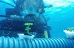 Khu vườn của Nemo - Giải pháp cho tình trạng cạn kiệt tài nguyên trên mặt đất?