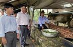 An Giang: Nuôi bò, nuôi trùn quế kiểu tuần hoàn, nông dân ở đây cùng giúp nhau làm giàu