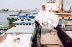 Vì sao giá gạo xuất khẩu của Việt Nam tăng vọt trong tháng 11, đạt gần 500 USD/tấn?