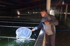 Ninh Bình: Nuôi ấu trùng trong bể nước xanh lè, ông nông dân bỗng chốc thành tỷ phú, thoát cảnh vỡ nợ