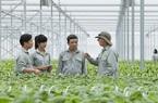 Gỡ nút thắt hút vốn ngoại vào nông nghiệp