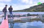Lâm Đồng: Mô hình nuôi cá trên đập Kala
