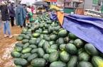 Đàm phán để nông sản đi Trung Quốc bằng đường chính ngạch