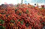 Vải thiều mở đường cho nông sản Việt
