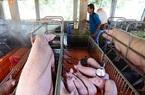 Bộ NN&PTNN lên kế hoạch ứng phó nguy cơ xuất hiện virus Corona ở động vật