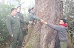 Hiệu quả công tác quản lý, bảo vệ rừng trên đỉnh Copia