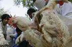 Nông dân Trung Quốc có nguy cơ mất trắng hàng triệu con gà vì dịch virus Corona