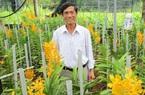Đà Nẵng: Trồng lan Mokara, U60 vẫn sắm được xe hơi tiền tỷ
