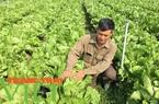 Mộc Châu ứng dụng công nghệ cao vào sản xuất nông nghiệp