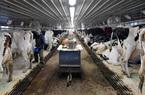 Nông dân Mỹ loay hoay tìm đầu ra cho nông sản