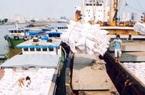 Một doanh nghiệp xuất khẩu hàng trăm triệu USD gạo 'ngồi trên đống lửa' vì 'chờ' chính sách