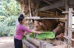 Nông thôn mới Sơn La: Nhiều đổi thay ở Chiềng Ngàm