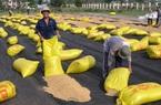 Phát hành lại hồ sơ đấu thầu gạo dự trữ quốc gia