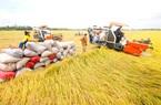 """Chuyên gia nông nghiệp: """"Vụ Hè - Thu rất quan trọng, cần có chiến lược phù hợp"""""""