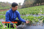 Phát triển nông nghiệp hữu cơ, hướng đi bền vững ở Mộc Châu