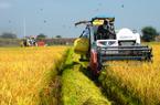 Giữa dịch Covid-19, xuất siêu nông sản vẫn tăng gần 50%