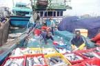 """""""Săn"""" cá ngừ sọc dưa bằng lưới rê, 1 chuyến biển lãi gần trăm triệu"""