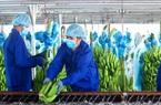 Thaco lần đầu có doanh thu nông nghiệp