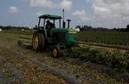 Nông sản Mỹ ùn ứ bất chấp cam kết tăng cường nhập khẩu của Trung Quốc