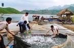 """""""Bà đỡ"""" thúc đẩy xây dựng nông thôn mới ở Quỳnh Nhai"""