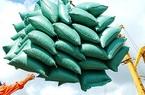 Bộ Công Thương kiến nghị xuất khẩu gạo bình thường từ 1/5