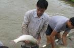 Ở nơi này, dân khá giả lên nhờ nuôi cá to bự chuẩn VietGAP