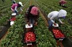 Nông dân Mỹ ngậm trái đắng, xu hướng chuyển sang thịt chay