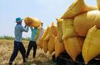 Thủ tướng đồng ý bỏ hạn ngạch, cho xuất khẩu gạo bình thường trở lại từ 1/5