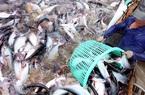 """Cá tra Việt: Giá giảm nhưng vẫn còn cơ hội """"vực dậy"""""""