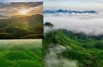 """Ảnh: Đồi chè Long Cốc ở Phú Thọ đang độ đẹp như chốn thần tiên, nhanh đến """"sống ảo"""" còn kịp"""