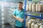 Quảng Nam: U40 trồng nấm sò thu tiền rủng rỉnh quanh năm