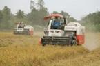 EU cấp hạn ngạch 80.000 tấn gạo/năm cho Việt Nam, xuất khẩu gạo sang EU cần điều kiện gì?